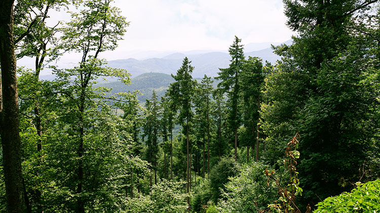 green-woodland-in-vosges-mountains-in-alsace-PNXH2PA