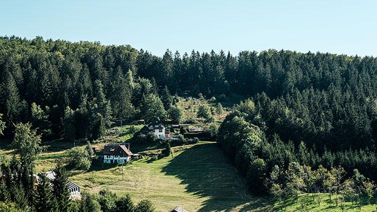 typical-view-of-landscape-in-sasbachwalden-black-f-ZGHX7EZ